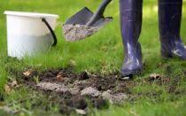 Удобрения для сада