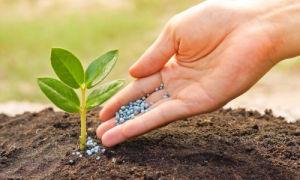Удобрения оптом: в чем преимущество?